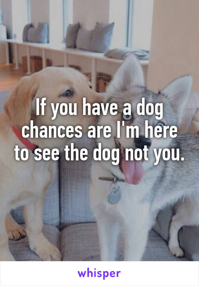If you have a dog chances are I'm here to see the dog not you.