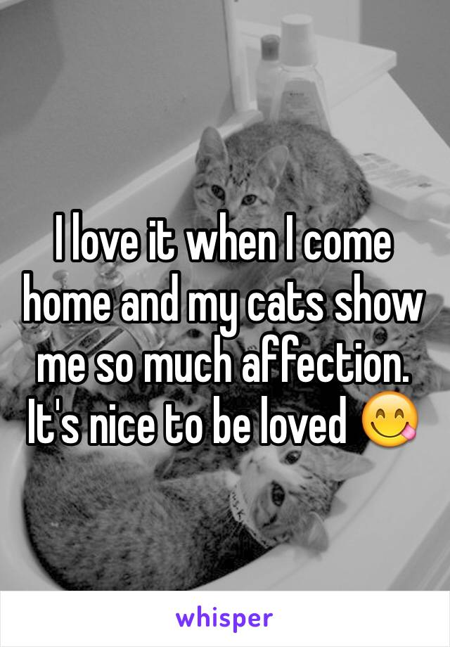 I love it when I come home and my cats show me so much affection. It's nice to be loved 😋