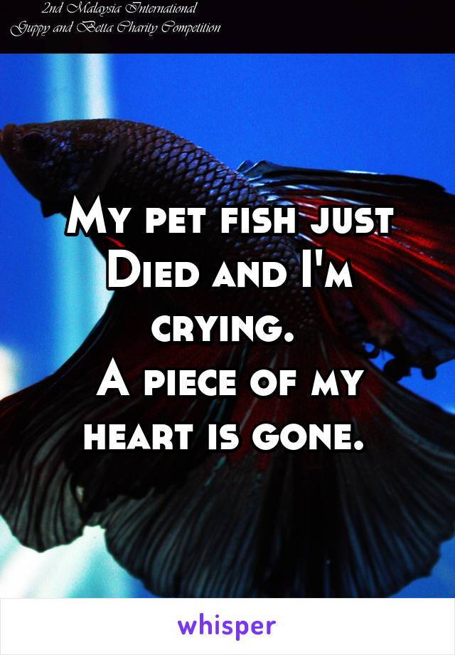 My pet fish just Died and I'm crying.  A piece of my heart is gone.