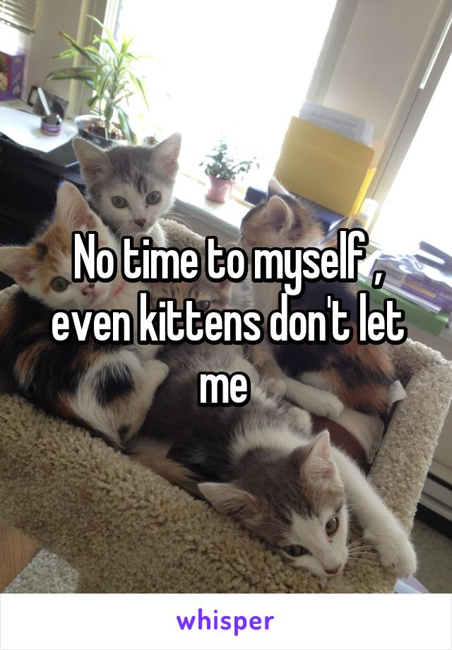 No time to myself , even kittens don't let me