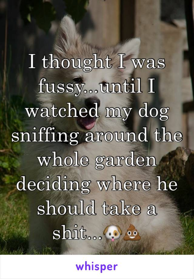 I thought I was fussy...until I watched my dog sniffing around the whole garden deciding where he should take a shit...🐶💩
