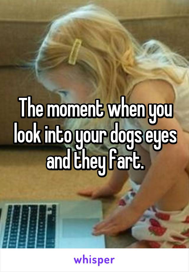 The moment when you look into your dogs eyes and they fart.