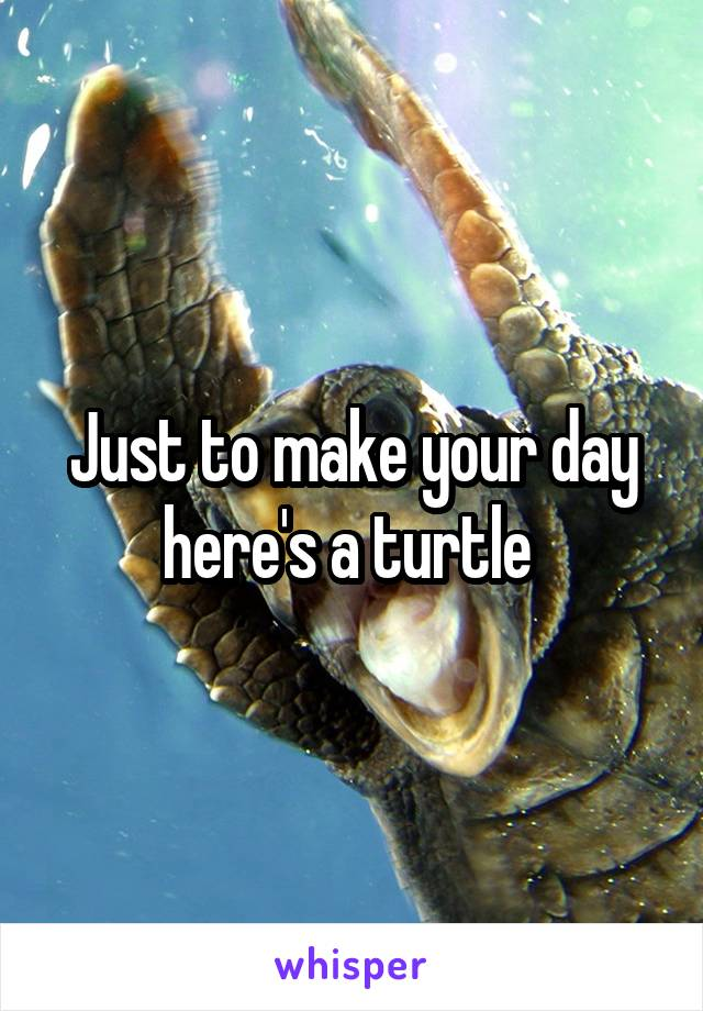 Just to make your day here's a turtle