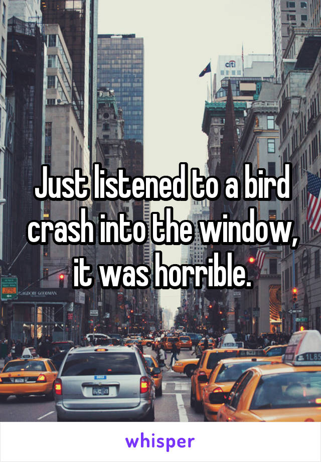 Just listened to a bird crash into the window, it was horrible.