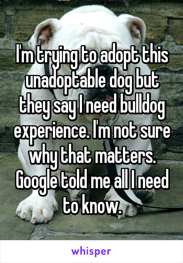 I'm trying to adopt this unadoptable dog but they say I need bulldog experience. I'm not sure why that matters. Google told me all I need to know.