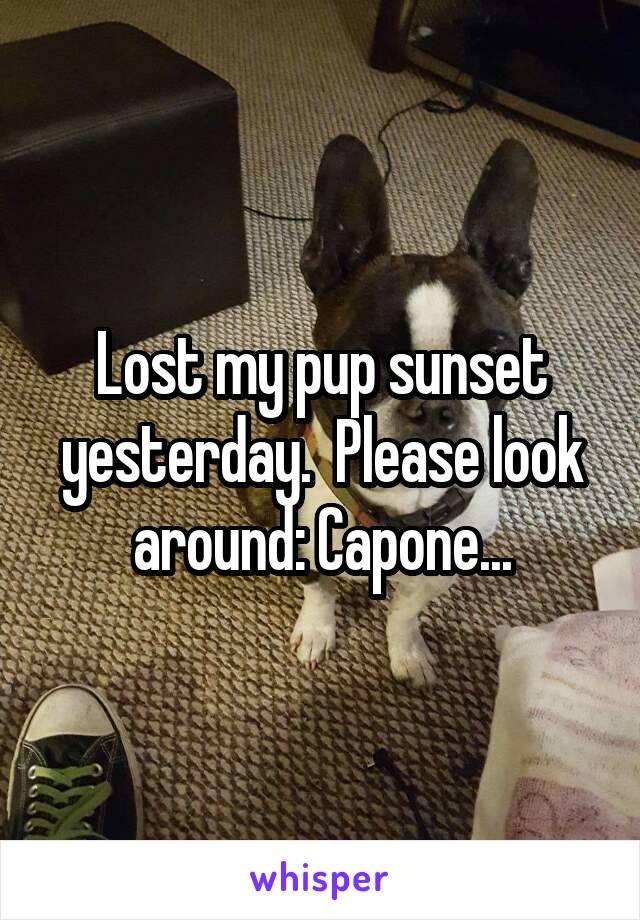 Lost my pup sunset yesterday.  Please look around: Capone...
