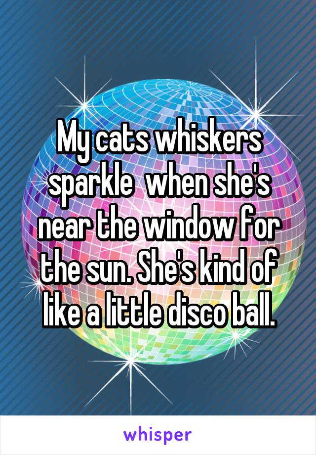 My cats whiskers sparkle  when she's near the window for the sun. She's kind of like a little disco ball.