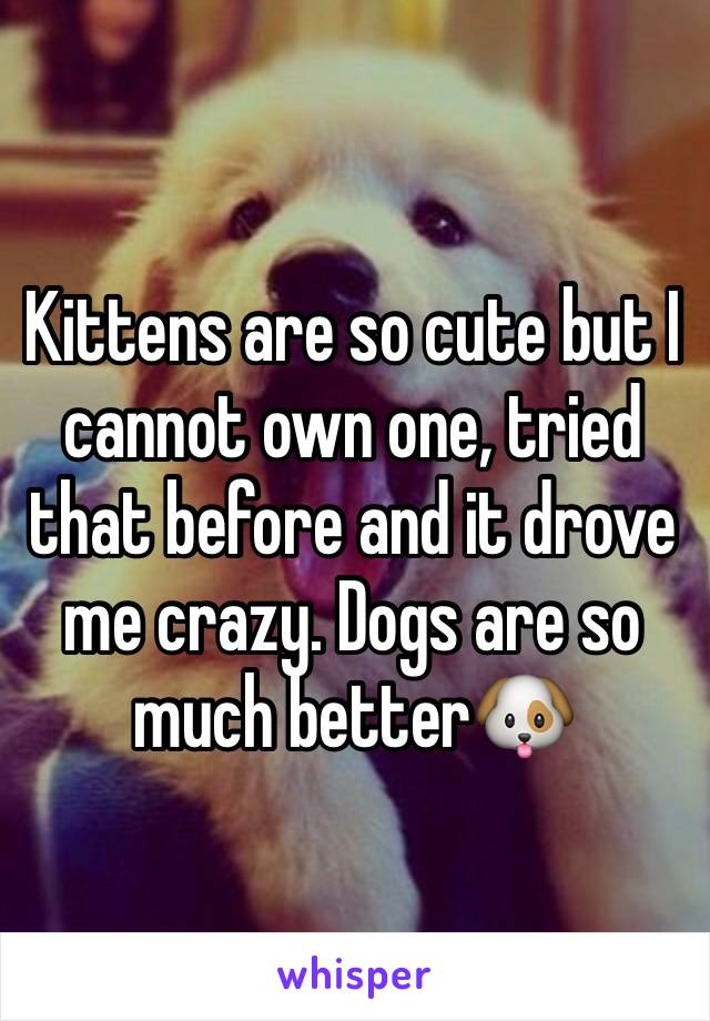 Kittens are so cute but I cannot own one, tried that before and it drove me crazy. Dogs are so much better🐶