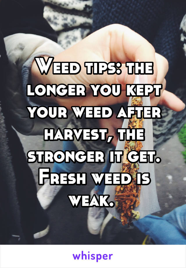 Weed tips: the longer you kept your weed after harvest, the stronger it get. Fresh weed is weak.
