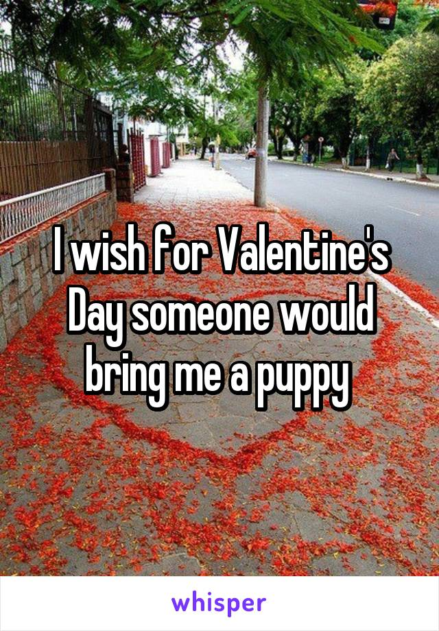 I wish for Valentine's Day someone would bring me a puppy
