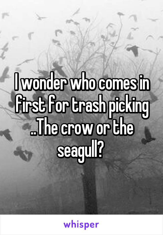 I wonder who comes in first for trash picking ..The crow or the seagull?