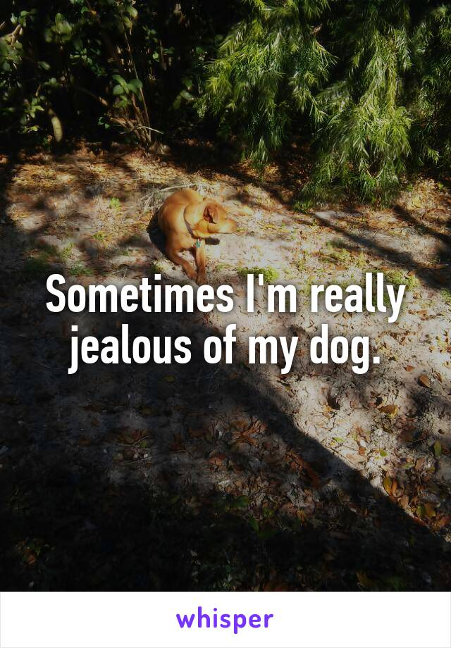 Sometimes I'm really jealous of my dog.