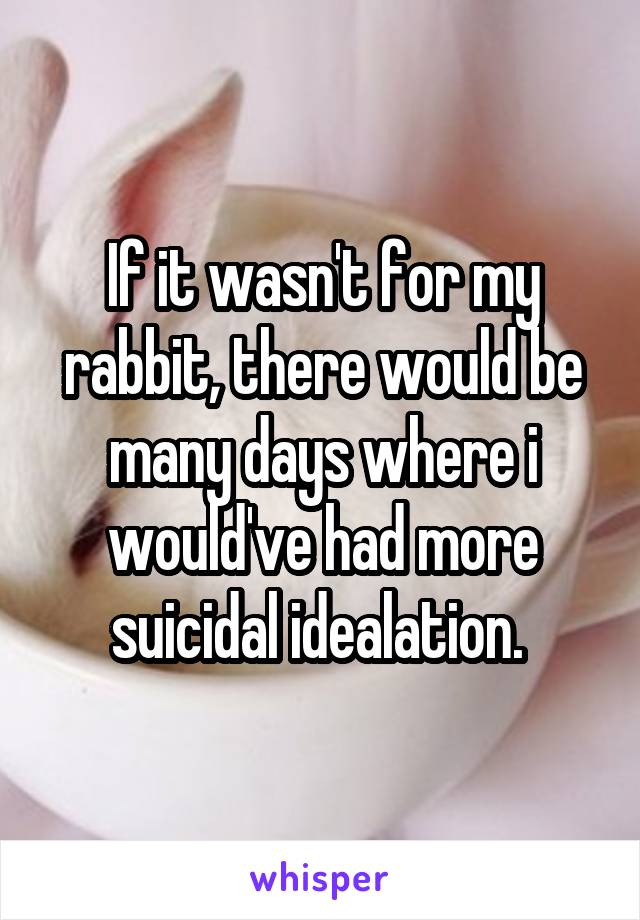 If it wasn't for my rabbit, there would be many days where i would've had more suicidal idealation.