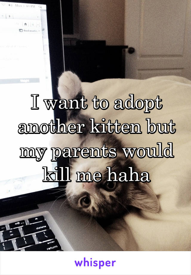 I want to adopt another kitten but my parents would kill me haha