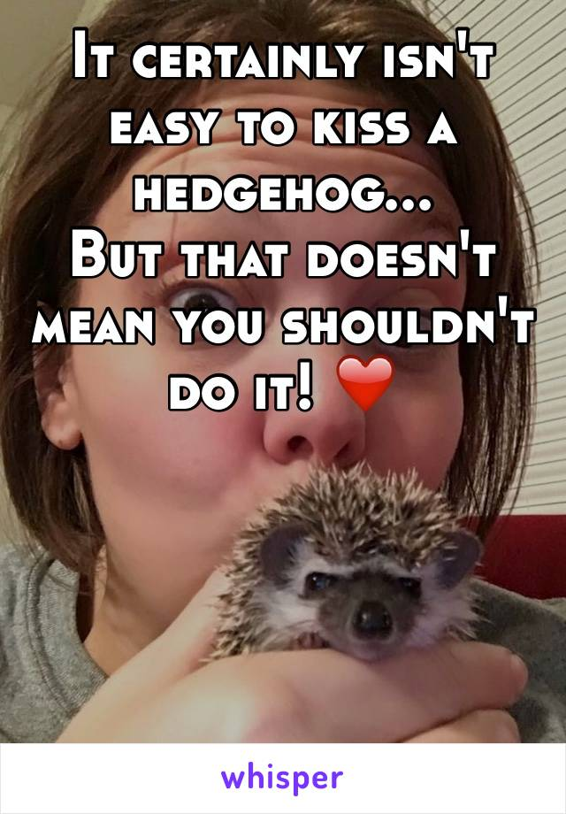 It certainly isn't easy to kiss a hedgehog... But that doesn't mean you shouldn't do it! ❤️