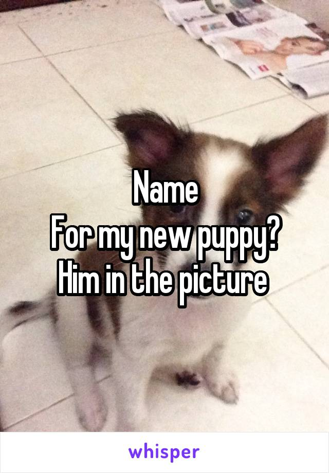 Name For my new puppy? Him in the picture