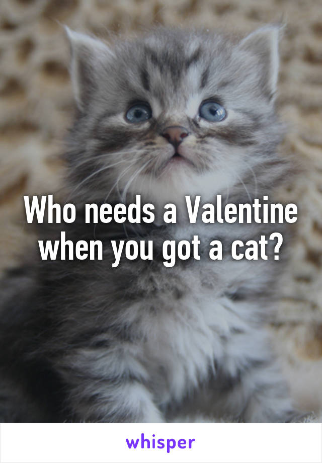 Who needs a Valentine when you got a cat?