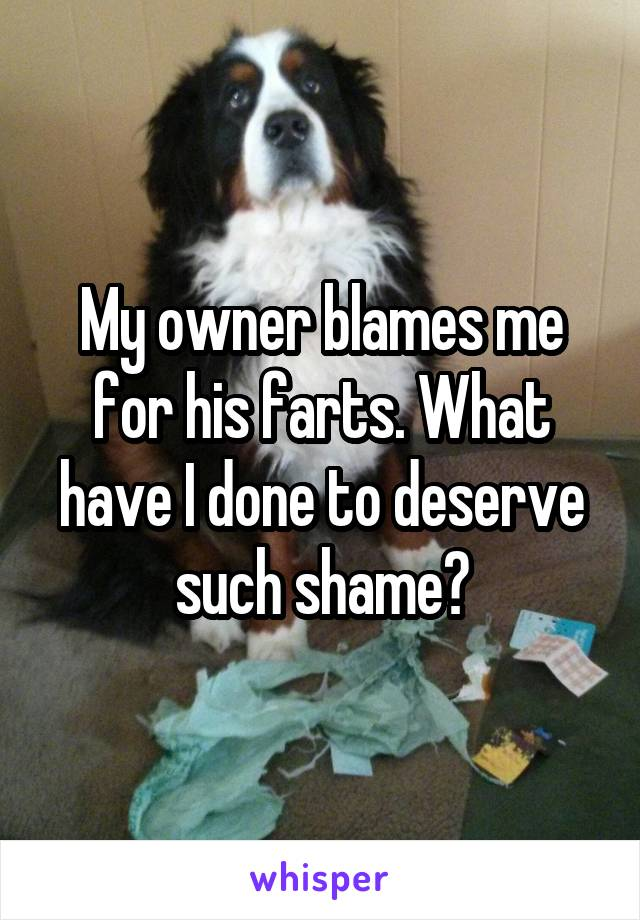 My owner blames me for his farts. What have I done to deserve such shame?
