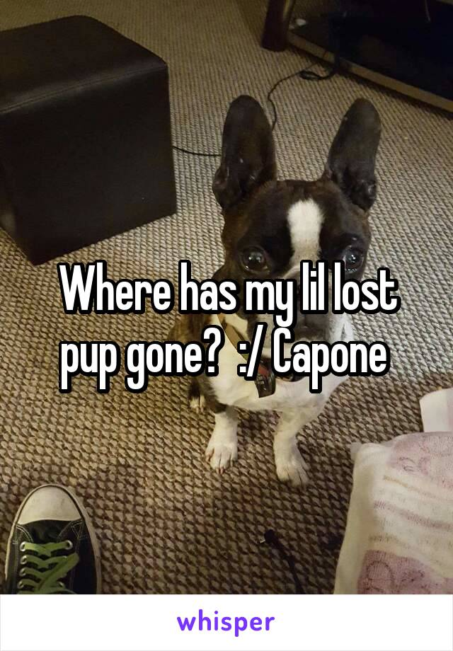 Where has my lil lost pup gone?  :/ Capone