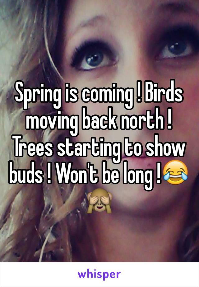Spring is coming ! Birds moving back north ! Trees starting to show buds ! Won't be long !😂🙈