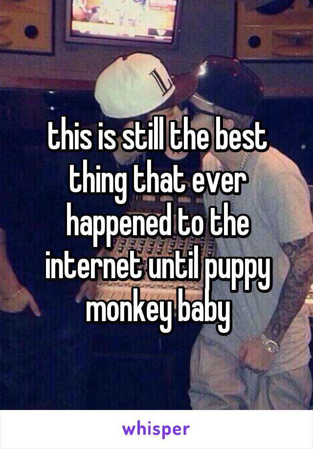 this is still the best thing that ever happened to the internet until puppy monkey baby