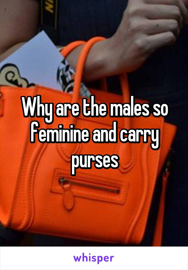 Why are the males so feminine and carry purses