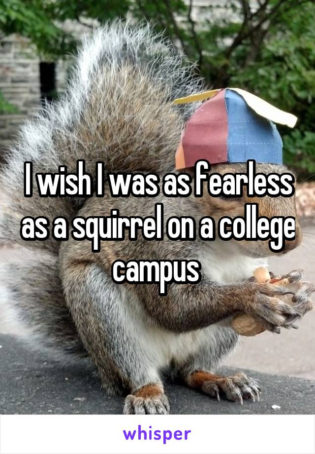 I wish I was as fearless as a squirrel on a college campus