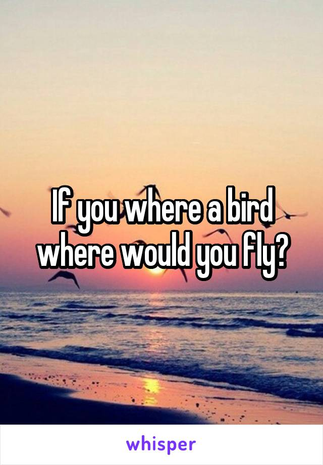 If you where a bird where would you fly?