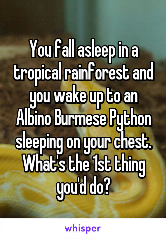 You fall asleep in a tropical rainforest and you wake up to an Albino Burmese Python sleeping on your chest. What's the 1st thing you'd do?