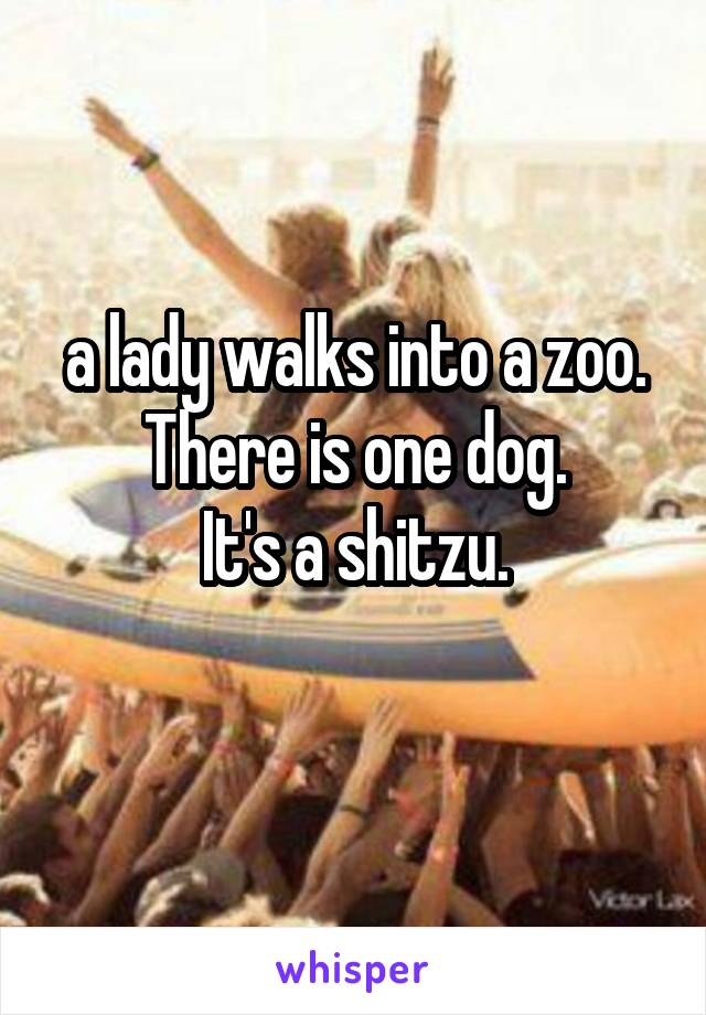 a lady walks into a zoo. There is one dog. It's a shitzu.