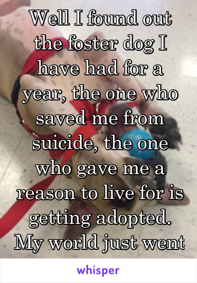 Well I found out the foster dog I have had for a year, the one who saved me from suicide, the one who gave me a reason to live for is getting adopted. My world just went crashing down.