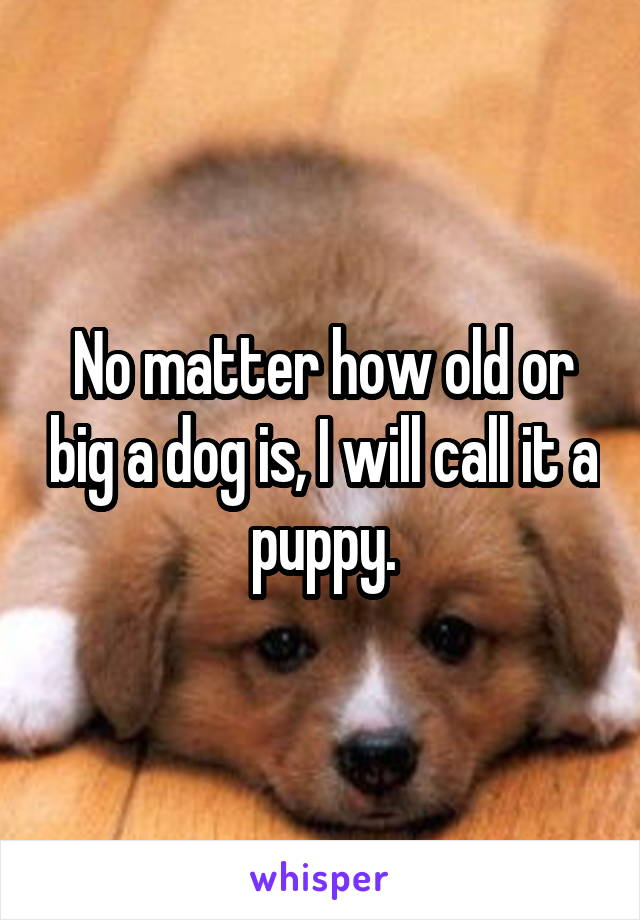 No matter how old or big a dog is, I will call it a puppy.