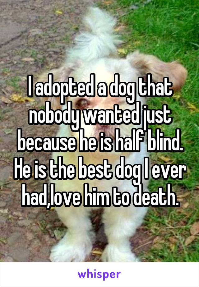 I adopted a dog that nobody wanted just because he is half blind. He is the best dog I ever had,love him to death.