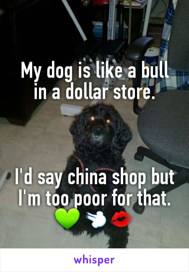 My dog is like a bull in a dollar store.    I'd say china shop but I'm too poor for that. 💚💨💋