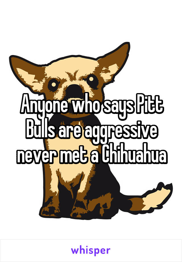 Anyone who says Pitt Bulls are aggressive never met a Chihuahua