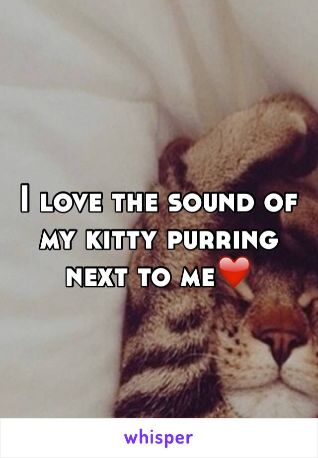 I love the sound of my kitty purring next to me❤️