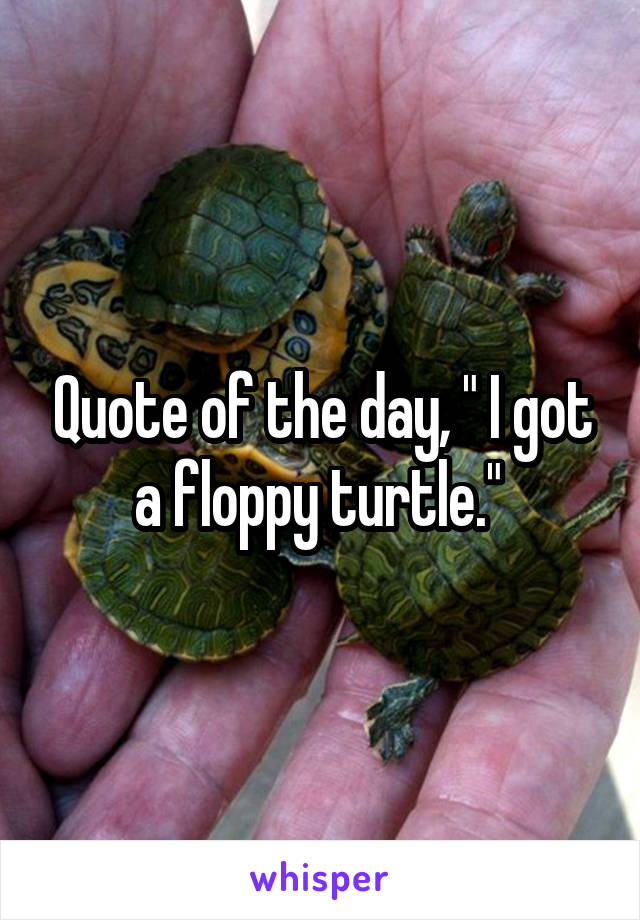 "Quote of the day, "" I got a floppy turtle."""