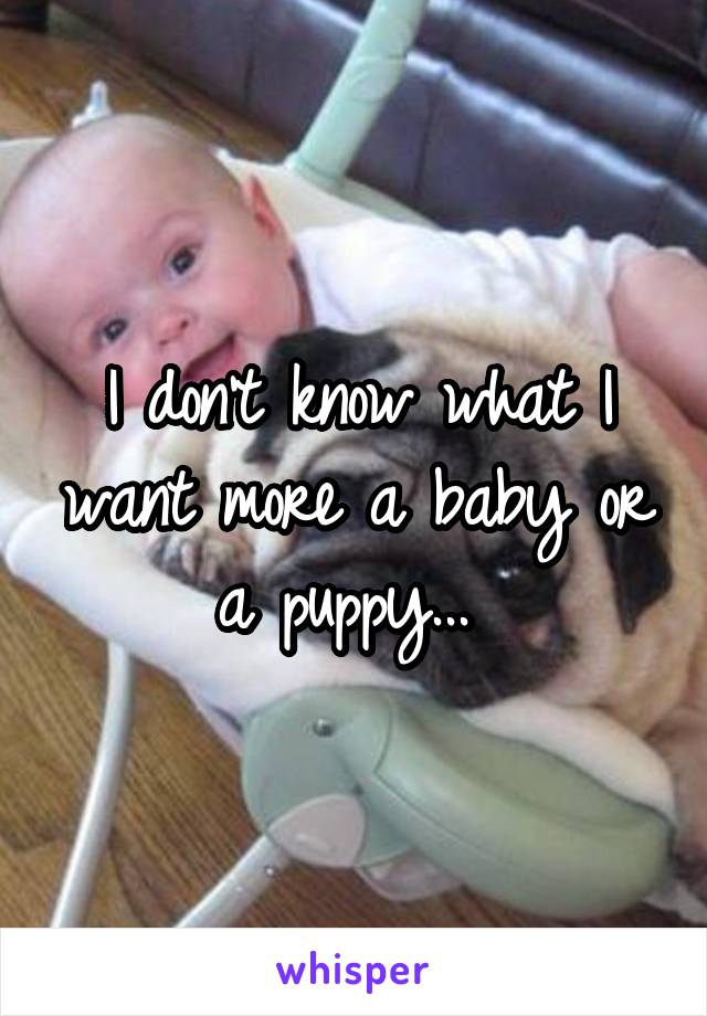 I don't know what I want more a baby or a puppy...
