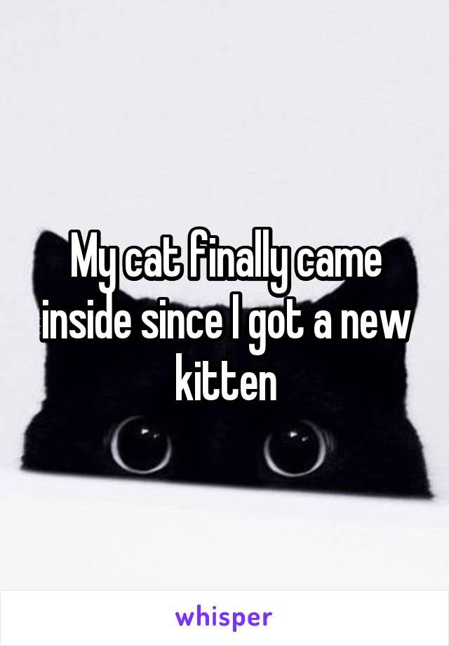 My cat finally came inside since I got a new kitten