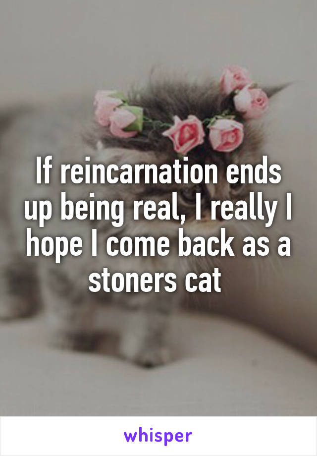 If reincarnation ends up being real, I really I hope I come back as a stoners cat