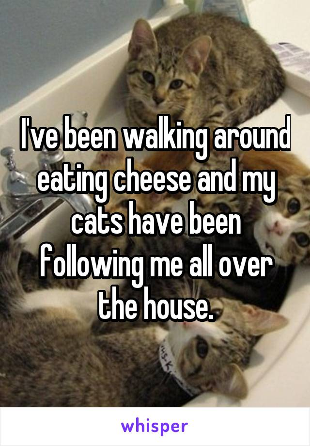 I've been walking around eating cheese and my cats have been following me all over the house.