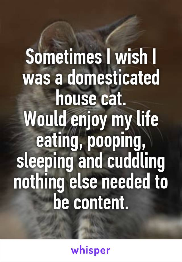 Sometimes I wish I was a domesticated house cat. Would enjoy my life eating, pooping, sleeping and cuddling nothing else needed to be content.