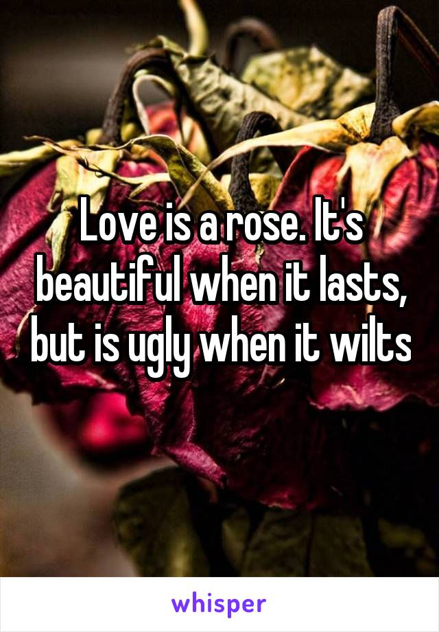 Love is a rose. It's beautiful when it lasts, but is ugly when it wilts