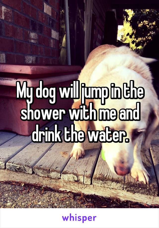 My dog will jump in the shower with me and drink the water.