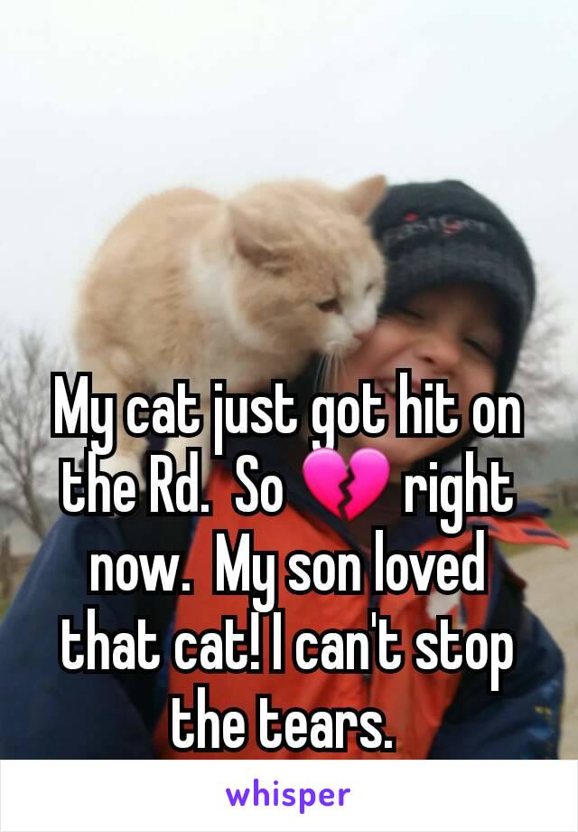 My cat just got hit on the Rd.  So 💔 right now.  My son loved that cat! I can't stop the tears.