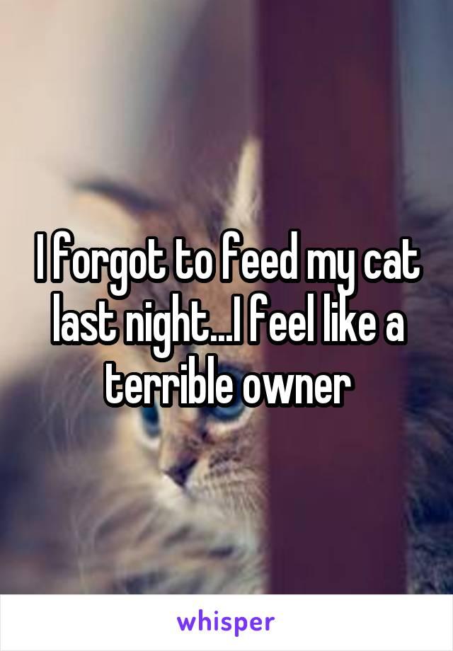 I forgot to feed my cat last night...I feel like a terrible owner