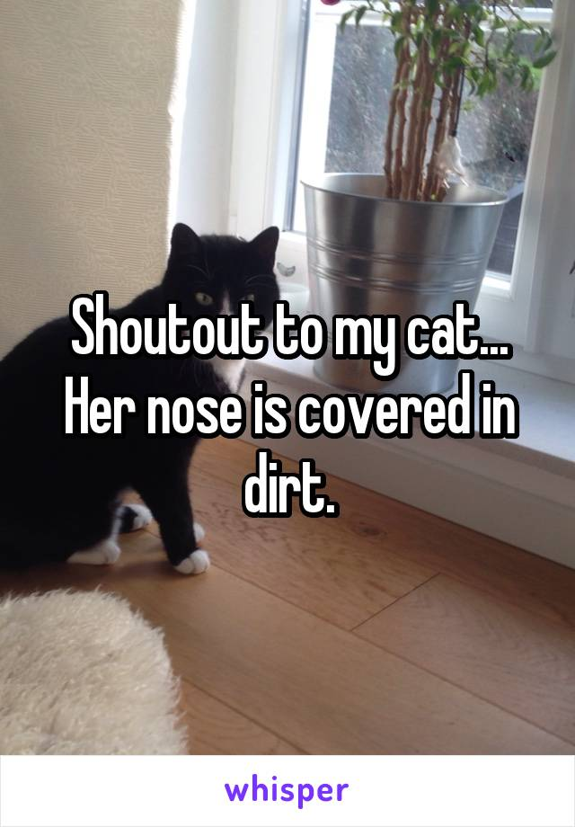 Shoutout to my cat... Her nose is covered in dirt.