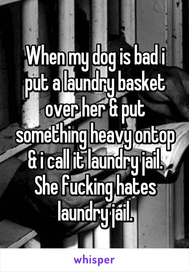 When my dog is bad i put a laundry basket over her & put something heavy ontop & i call it laundry jail. She fucking hates laundry jail.