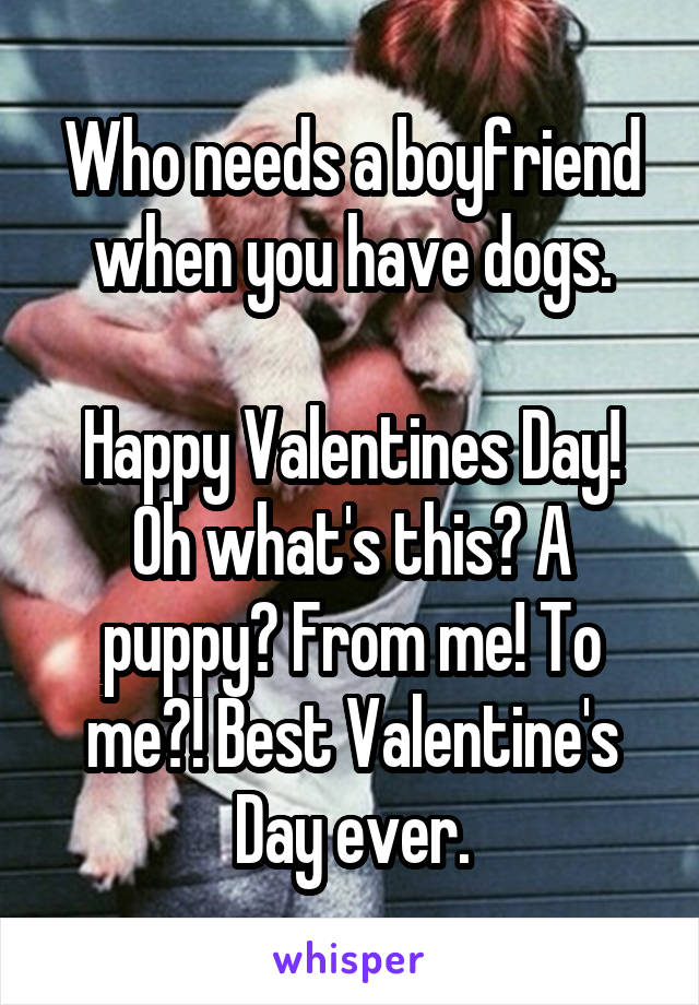 Who needs a boyfriend when you have dogs.  Happy Valentines Day! Oh what's this? A puppy? From me! To me?! Best Valentine's Day ever.