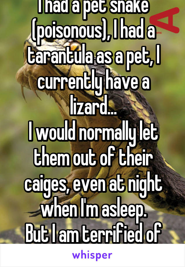 I had a pet snake (poisonous), I had a tarantula as a pet, I currently have a lizard... I would normally let them out of their caiges, even at night when I'm asleep. But I am terrified of ANTS.